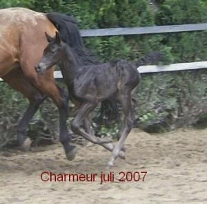 Charmeur 2007 (2)